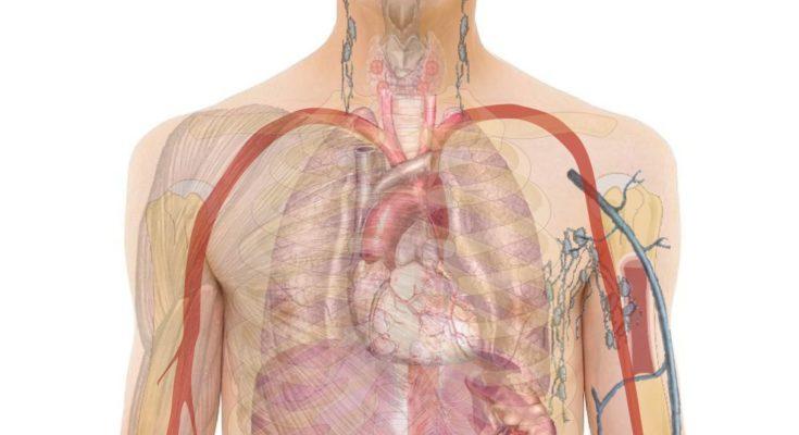 tünetek, ha férgek vannak a testben bőrkiütés helmintákkal