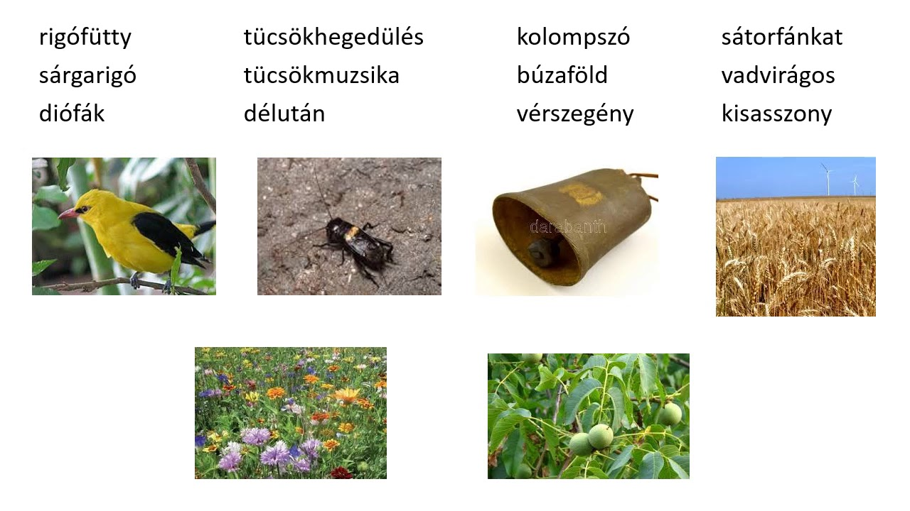 modern orvosság a pinwormok ellen)