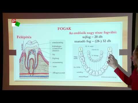 kavics a szájból egy szaggal gyógymódok a helminták kezelésére