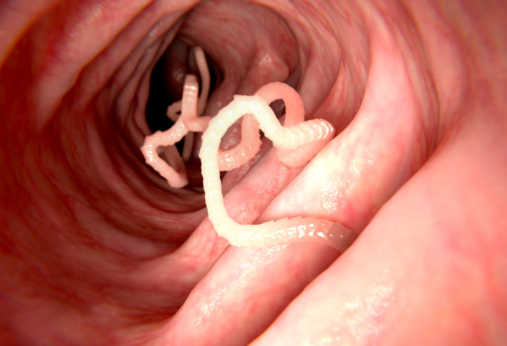 a lárva parazita