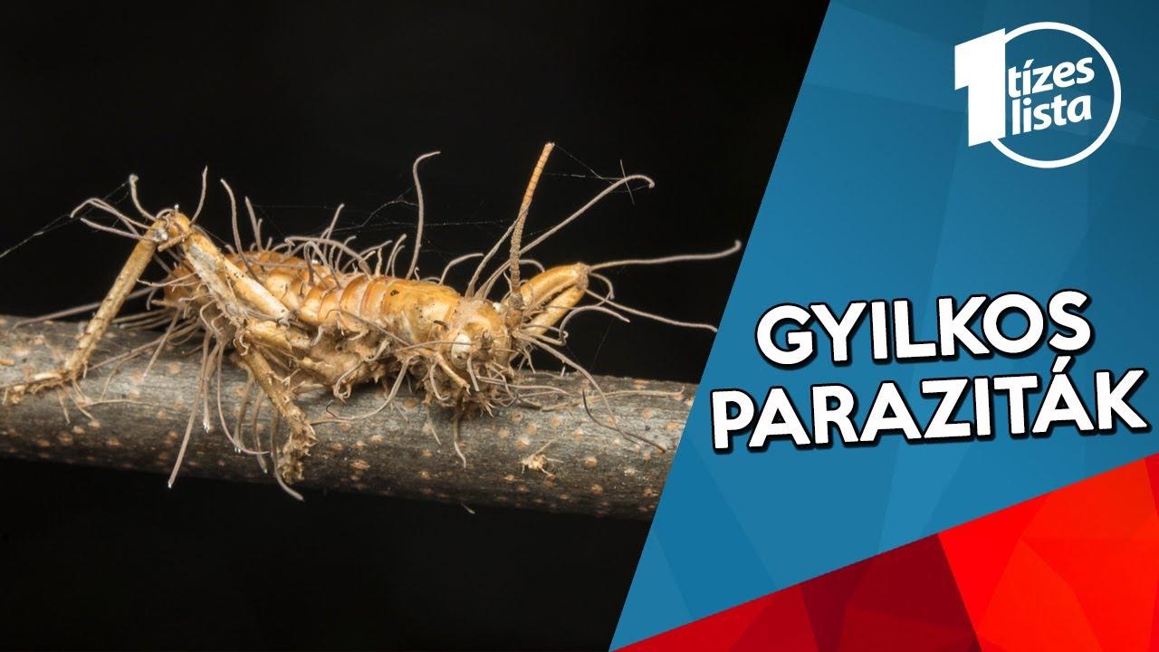 paraziták jelenlétének jelei a lamblia testében