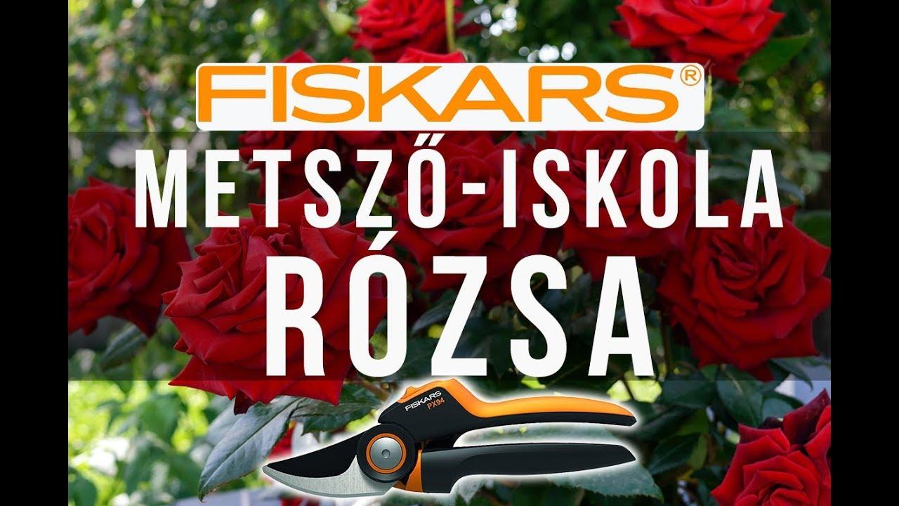 gyógymód a rózsa parazitái számára)