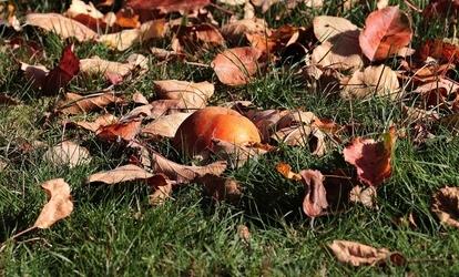 parazitákból a föld megművelése ősszel