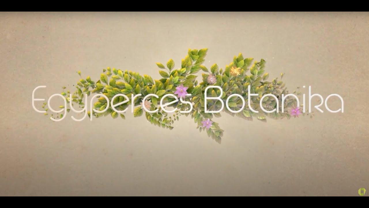 Erdei pajzsika testfelépítése, jellemzői, részei - Zöldszerész