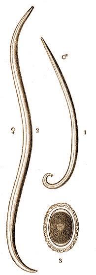 butria helminthiasis
