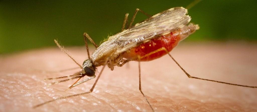 ascariasisban szenved paraziták antennákkal