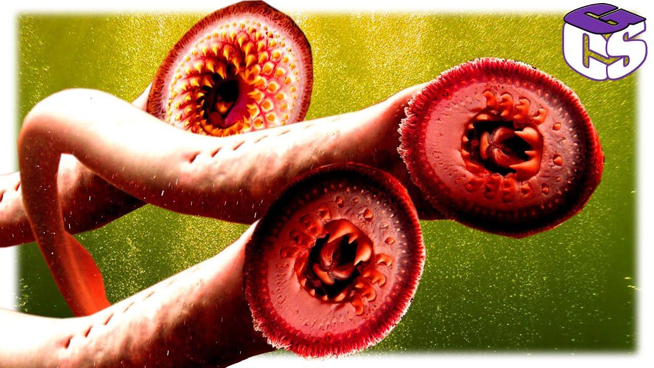 mit csinálnak a paraziták az emberi testben élő paraziták tünetei