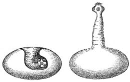 galandférgek és csoportok a gyepen egy személy paraziták vizsgálata