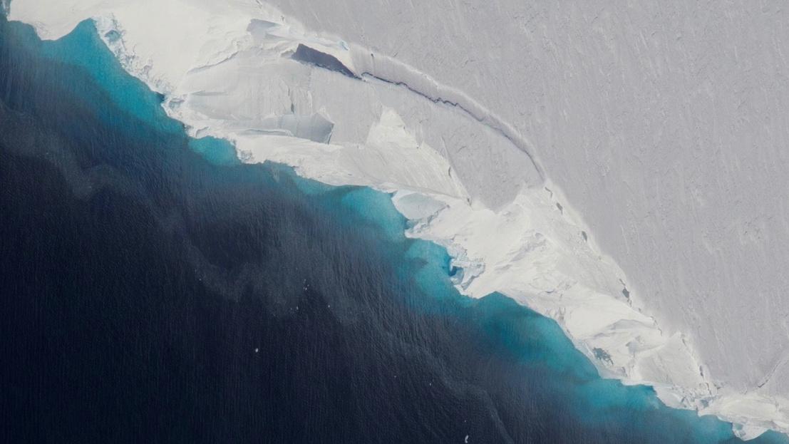 paraziták az antarktiszon