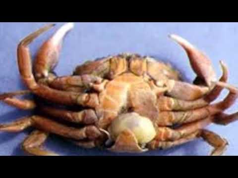 rák parazita sacculina gyógymód a giardia és a pinwormok ellen
