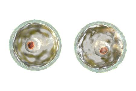 Parazita a nasopharynxben. A végbél viszketése felnőtt férgekben