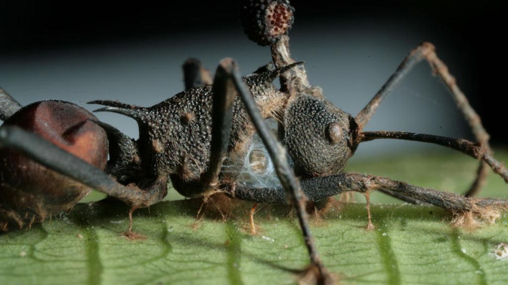 a paraziták megeszik az embert pinworms kerekférgek