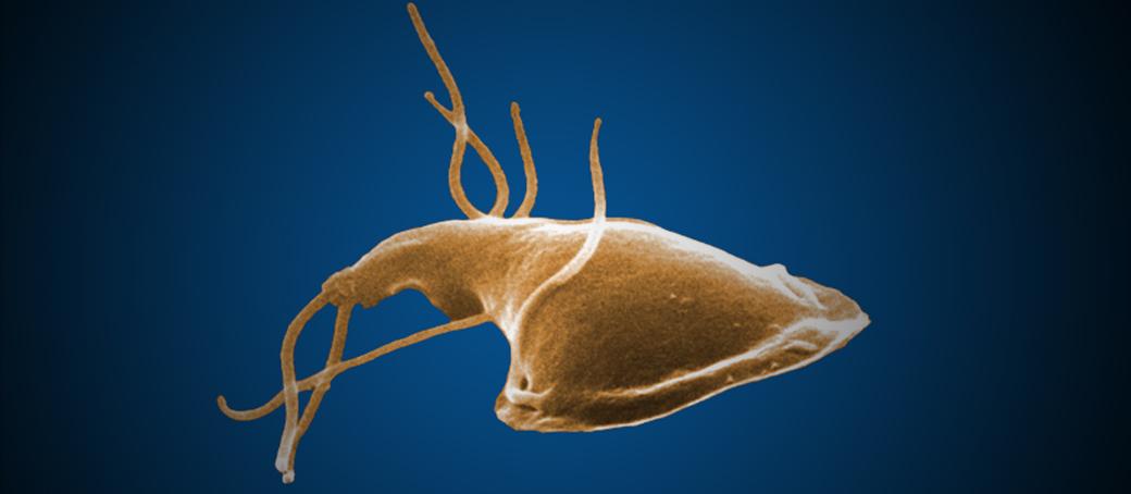 új gyógymódok a paraziták ellen tonhal és paraziták