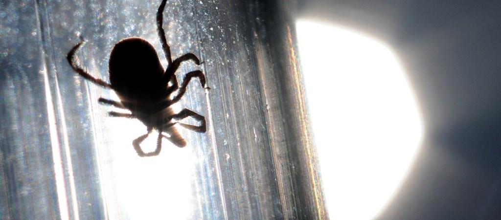 meg kell- e tisztulni a parazitáktól rossz lehelet kómával
