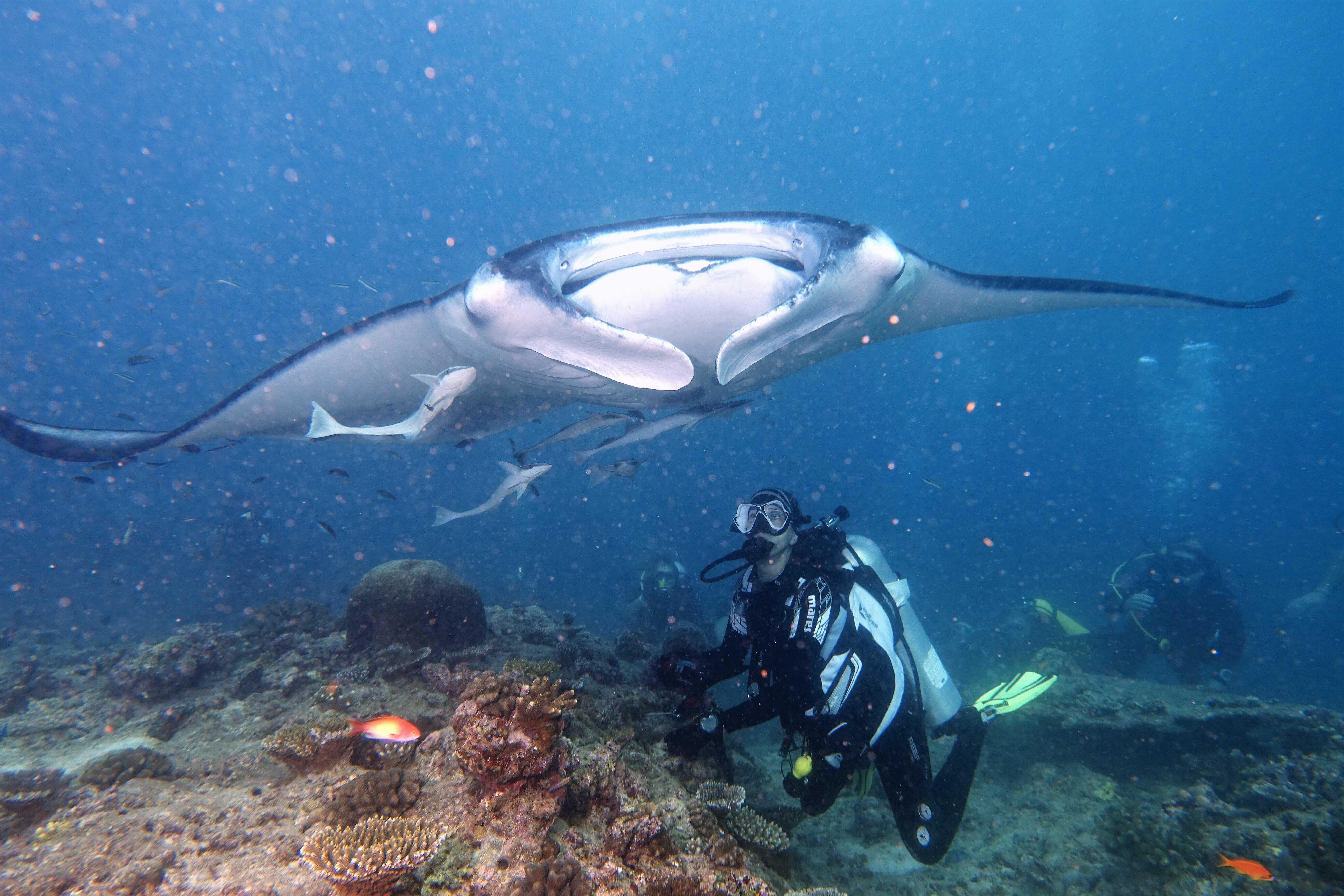 a maldív- szigeteken nincsenek paraziták
