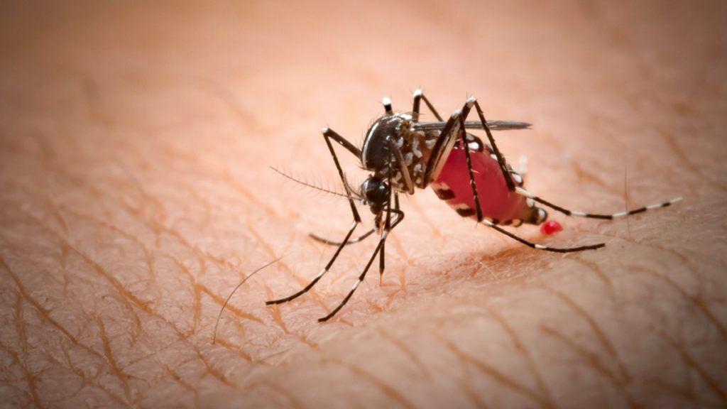 legkisebb paraziták hasi fájdalom paraziták