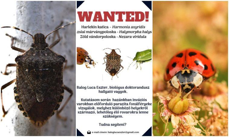 Inváziós petefészek enterobiasis