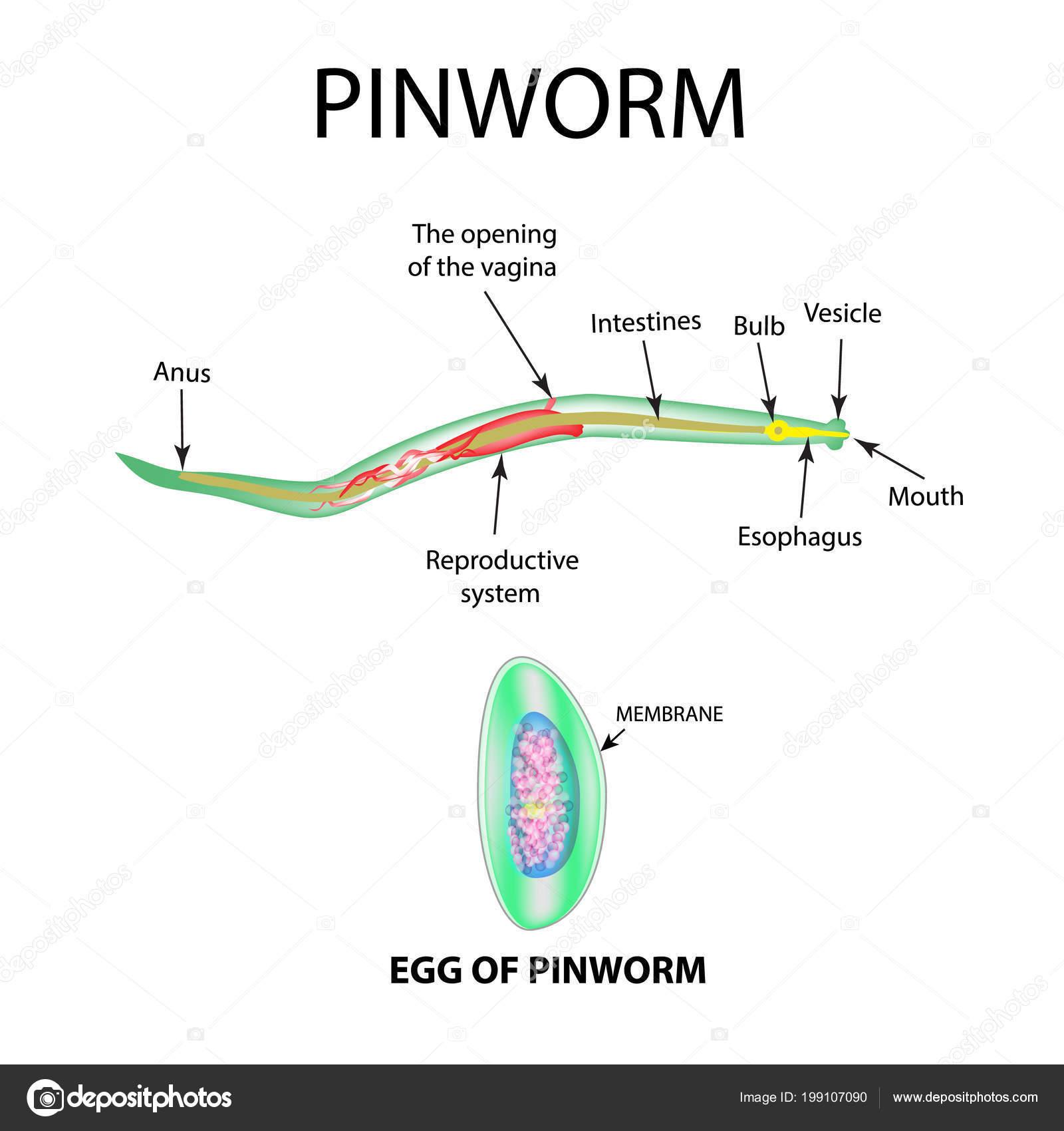 pinworm tojások milyen hőmérsékleten pusztulnak el