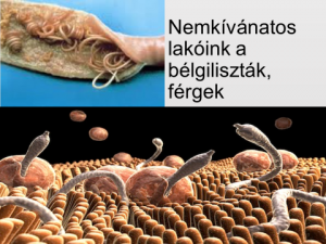 vízi parazita