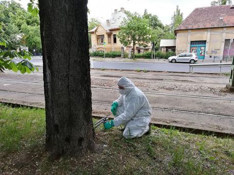fa kezelés kártevők ellen a rossz lehelet megszabadulni a gyógymódtól