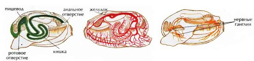 a máj fluke típusú szimmetriája az emberi parazitákról szóló első csatorna a hírekben