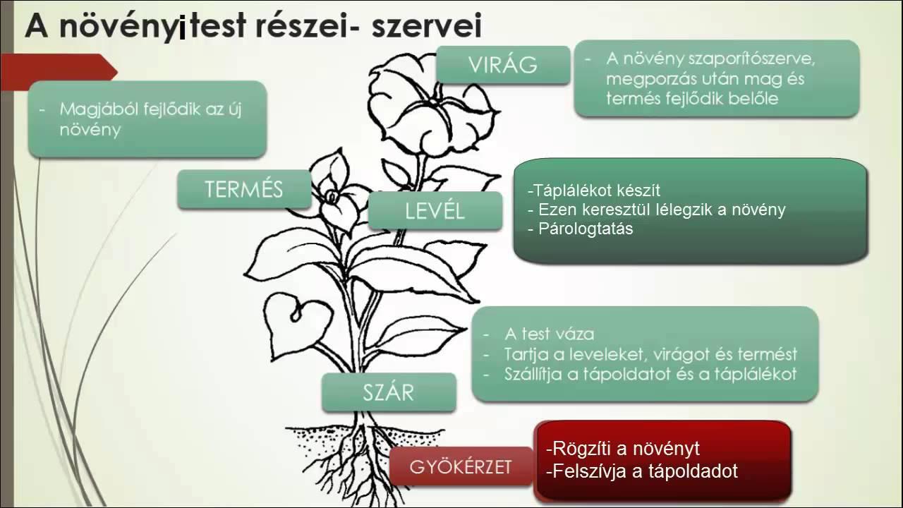 hatékony gyógyszerek a pinwormák kezelésére