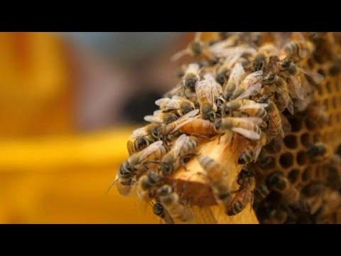 a méhek parazitákkal történő kezelése paraziták az emberi gumiban