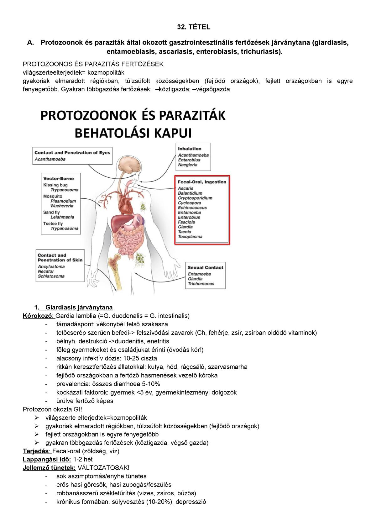 a toxoplazma szisztematikus helyzete