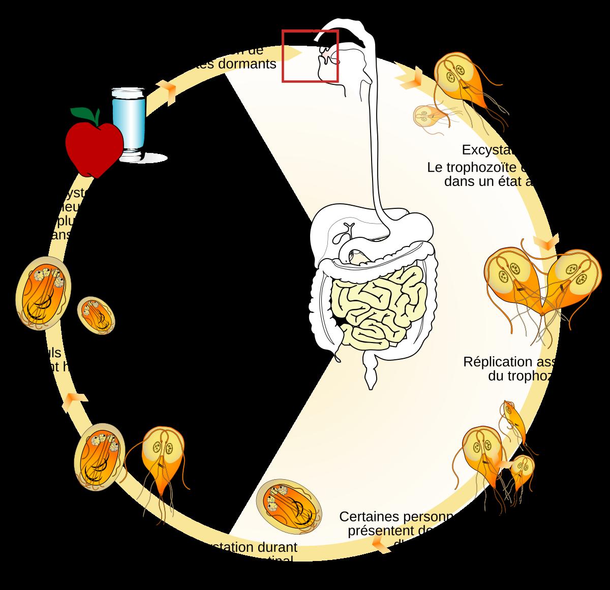 Stepanova parazitáktól való tisztítás neurózis és paraziták