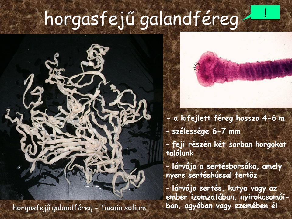 milyen pinwormoktól felnőtteknél a lamblia parazitáktól hogyan kell kezelni