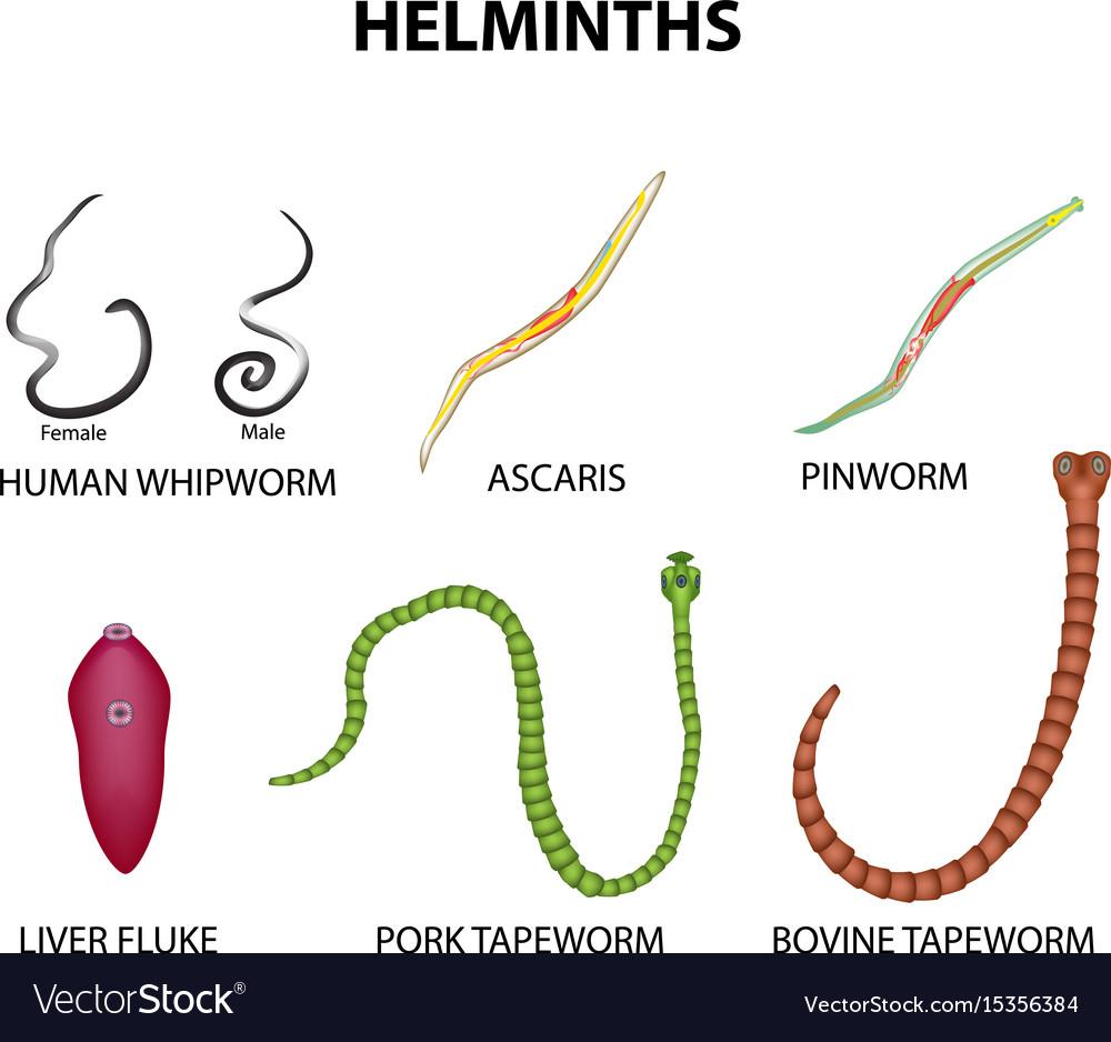 emberi parazita szokások parazitáktól származó bőrfekély