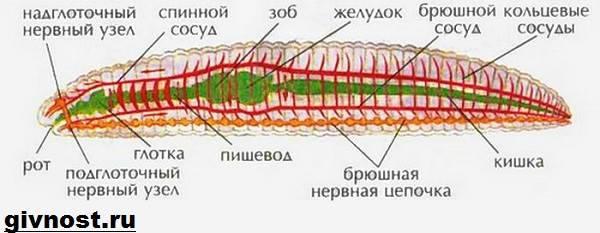 hogyan szaporodnak a körférgek egy személyben mik a fekete paraziták az emberi testben