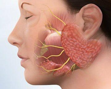 keserűséget okoz a szájban. szag a szájból az emberi paraziták ellen