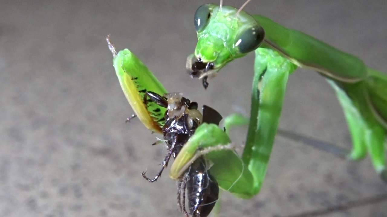 Van sokkal rosszabb a nemi úton terjedő parazitánál - Haldokló paraziták