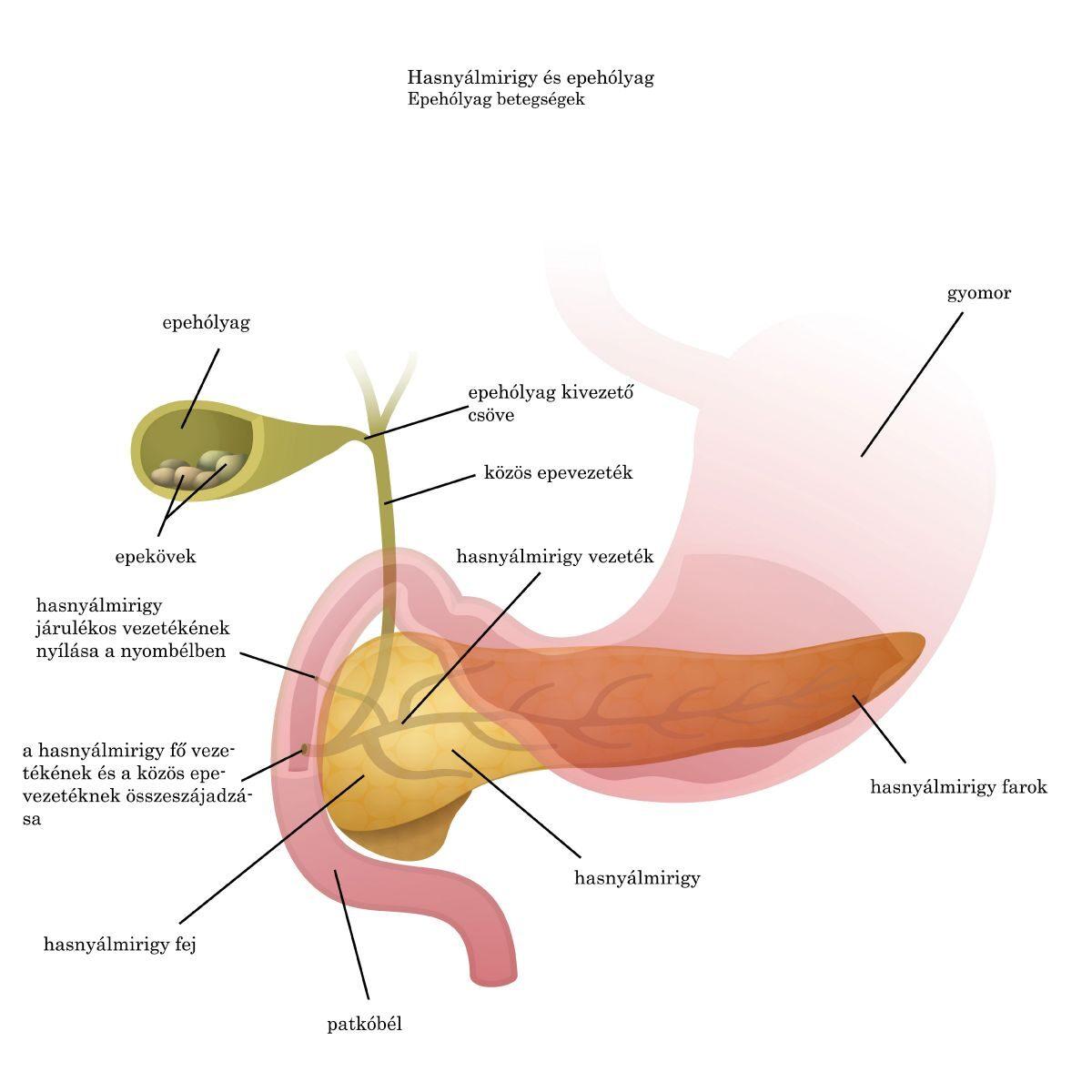 miért fáj a fej parazitáknak pinworm tojás egy felnőttnél