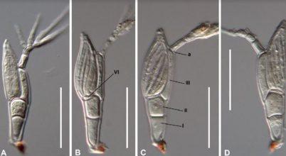 natalia paraziták földi kezelése