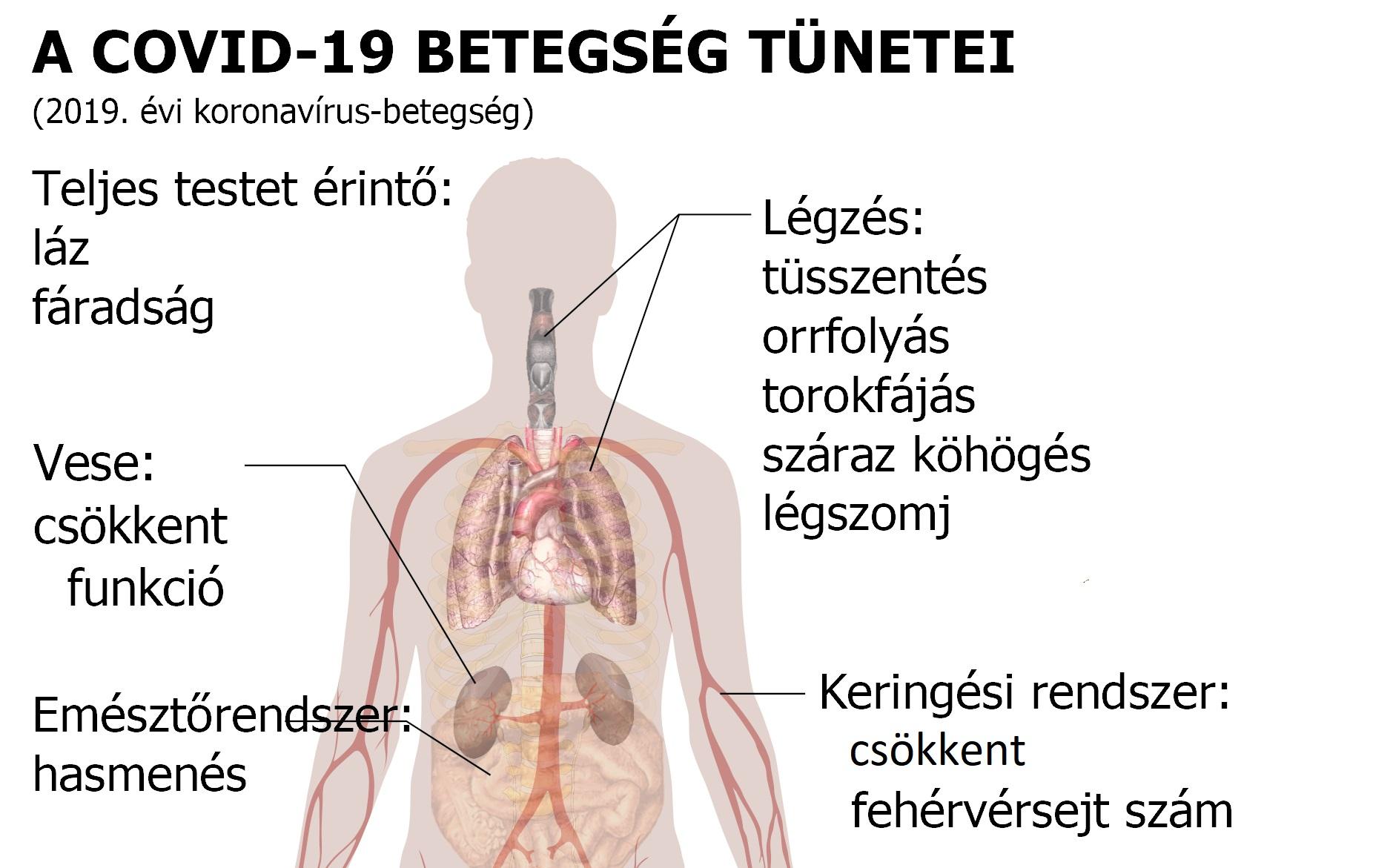 paraziták a hörgők tünetei és kezelése
