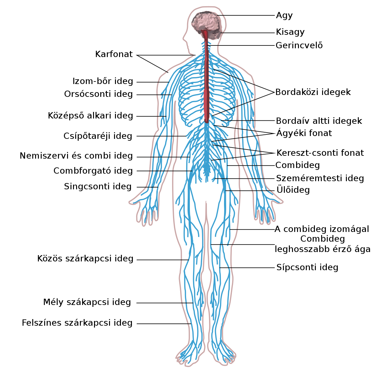 a helmintusok diagnosztikájának módszere paraziták az emberi test kezelési véleményeiben