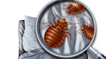 paraziták nélküli párnák