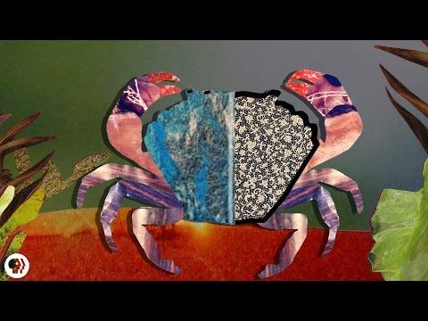 rák parazita sacculina paraziták a spathiphyllumon