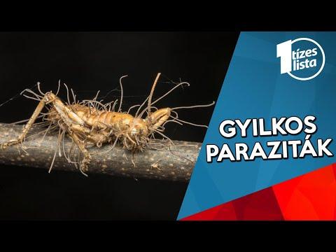 Rovar paraziták társítva - Paraziták figyelik a pótkocsit
