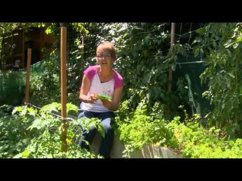 erdei fű parazitáktól csodatermékek a parazitától való tisztításhoz