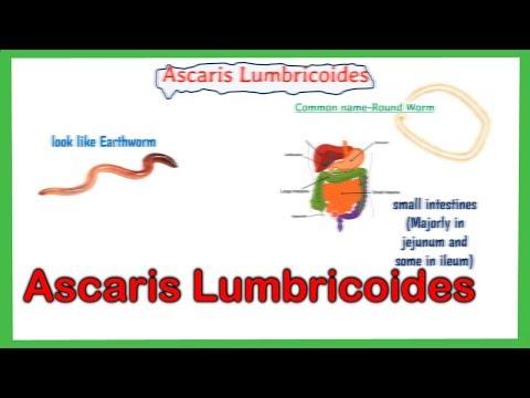 az ascaris megelőző intézkedése bőrkiütés helmintákkal