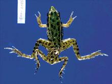 viszketés a végbélférgekben giardia paraziták és mások