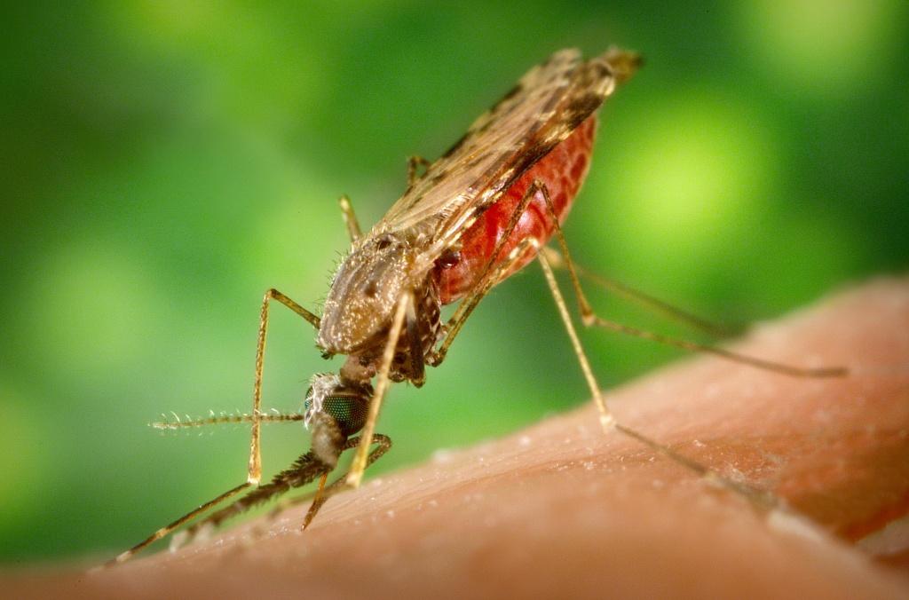 tiande parazita elleni szerek a méreganyagok és paraziták testének megtisztításának módszerei