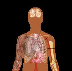 emberi paraziták és tüneteik