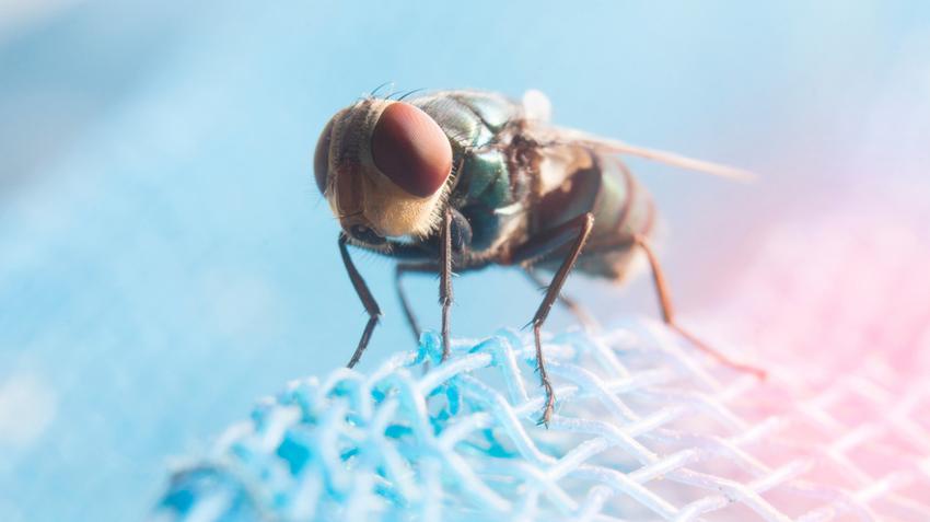 az epe szaga a szájat okozza szervrendszerek szarvasmarha galandféregben