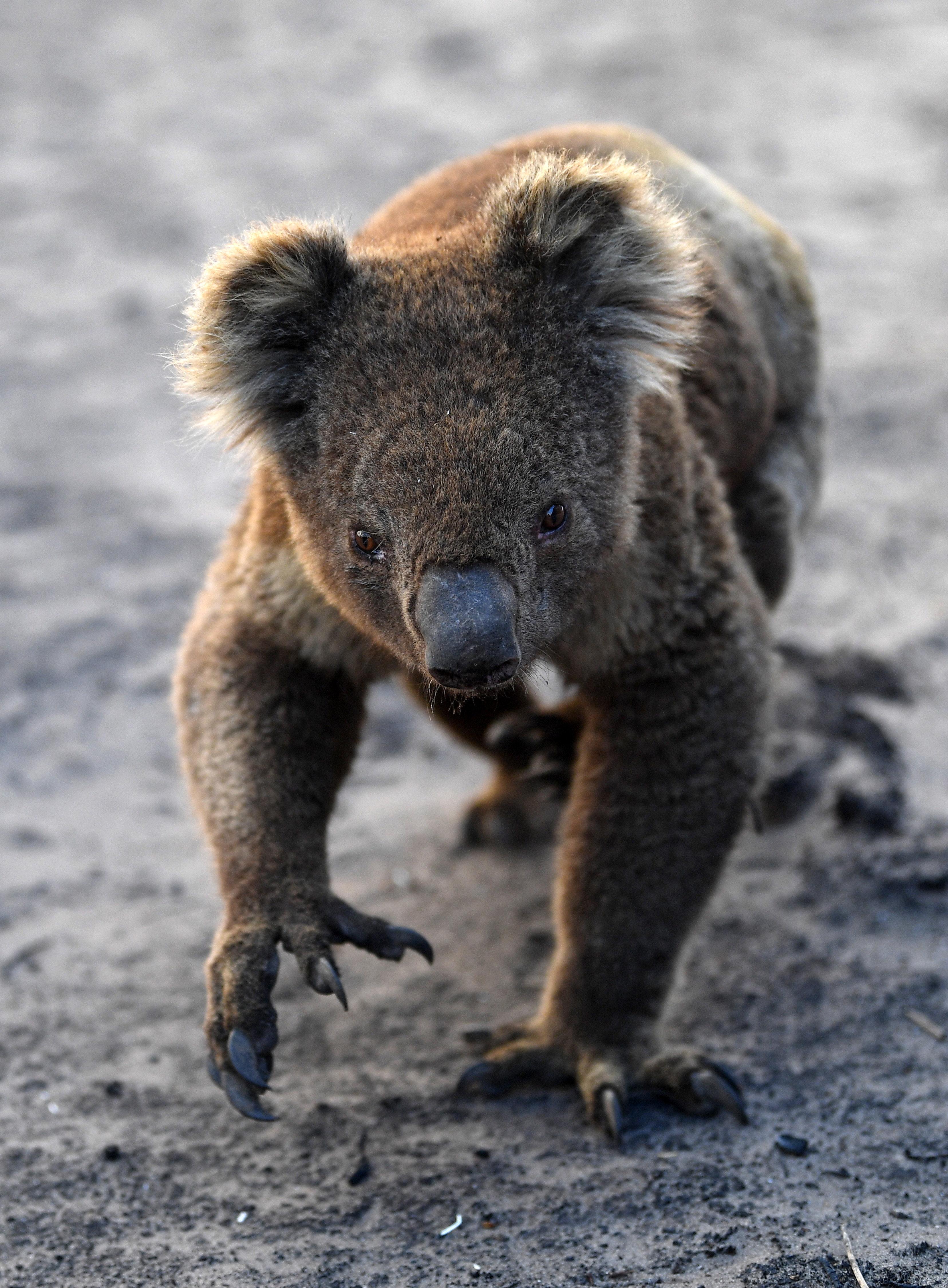 parazita Ausztráliában a paraziták a megelőzés és a megtisztítás legjobb módjai