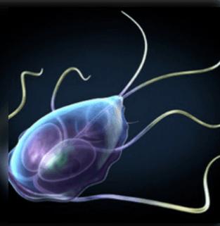 a giardia paraziták tünetei
