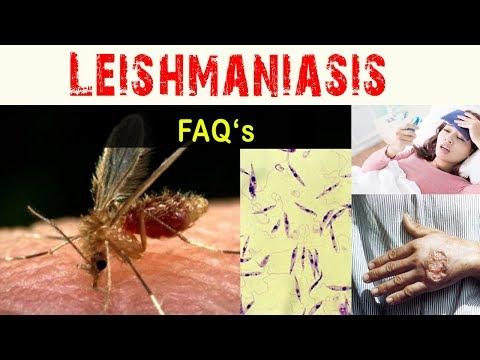 bőrfekélyt okozó paraziták hangolja fel a paraziták szaténját